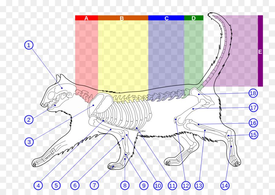 Wildcat Felidae Kitten Cat Anatomy Catus Png Download 20001414