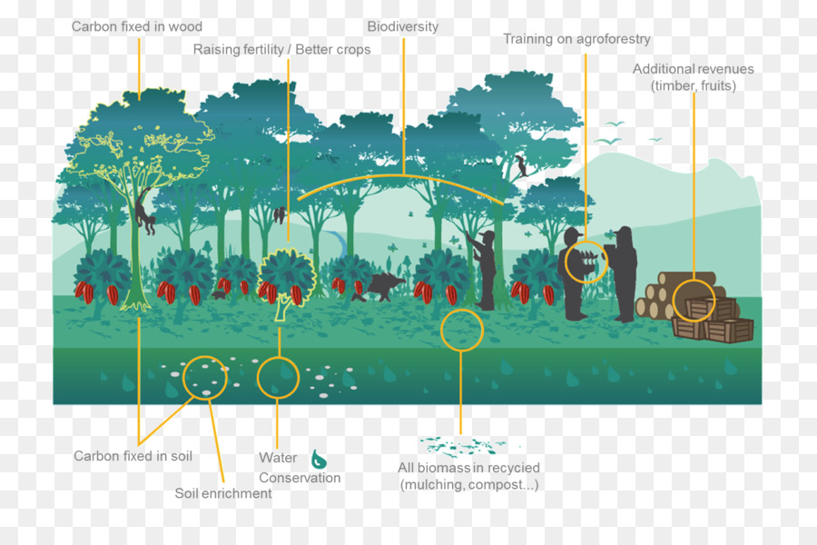 ecosystem, agroforestry, tree, diagram png
