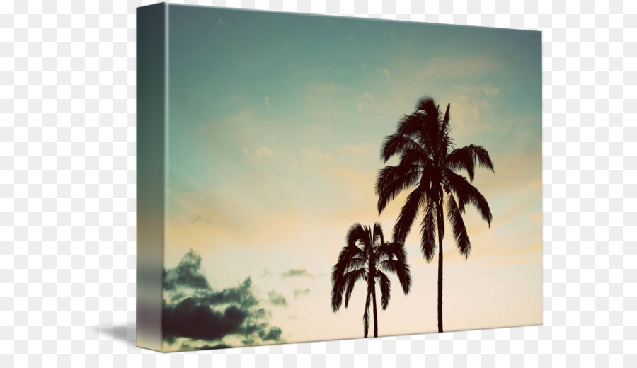 Painting Picture Frames Arecaceae Tree Sky Plc Overlooking The