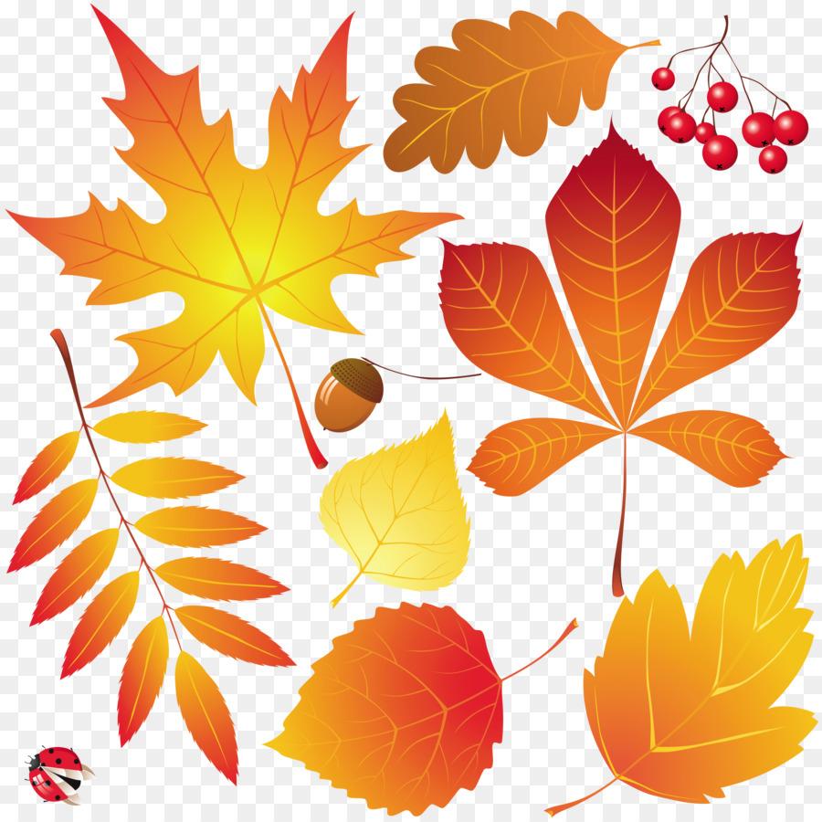 Hojas de oto o de dibujo hojas de oto o png dibujo - Descargar autumn leaves ...