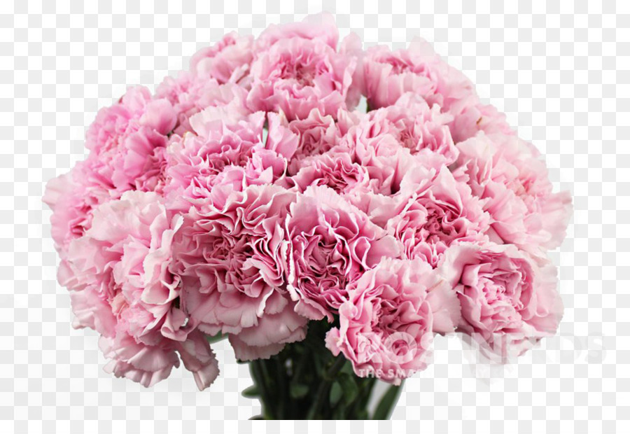 Carnation Pink flowers Flower bouquet - chrysanthemums png download ...