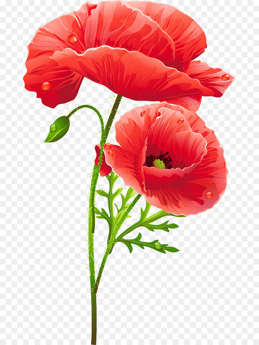 Flower Poppy Flower Png Download 7391200 Free Transparent