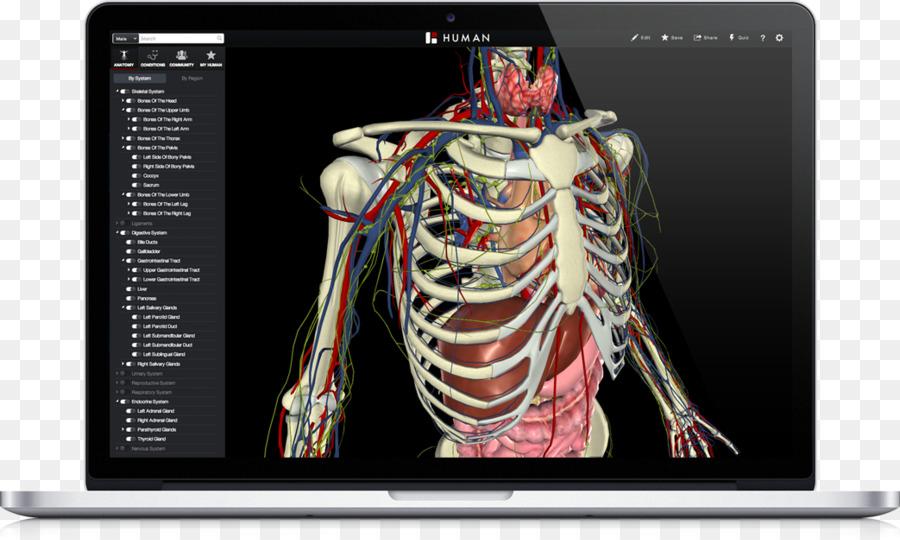 Atlas der Anatomie des Menschen Anatomía Humana Y Fisiología del ...