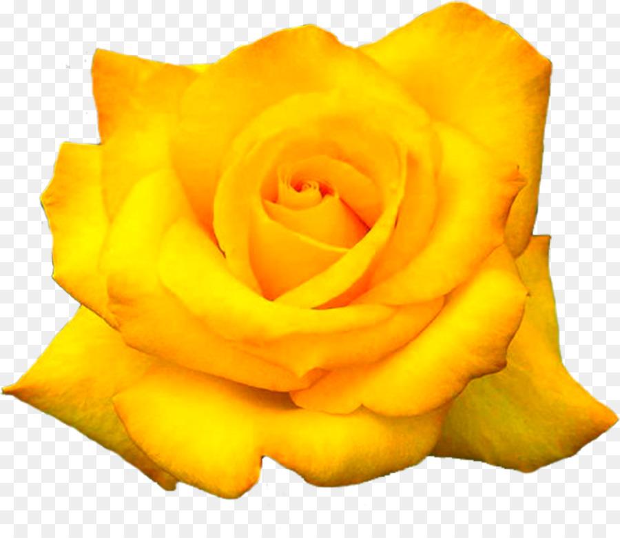 The yellow rose of texas flower desktop wallpaper flower png the yellow rose of texas flower desktop wallpaper flower mightylinksfo