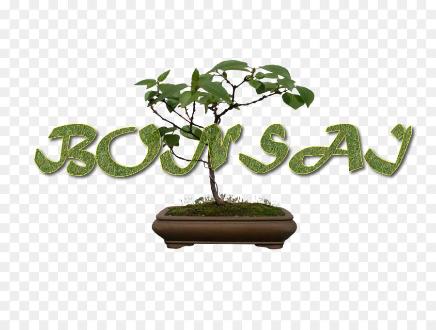 Sageretia Theezans Blumentopf Bonsai Baum The Karate Kid Bonsai