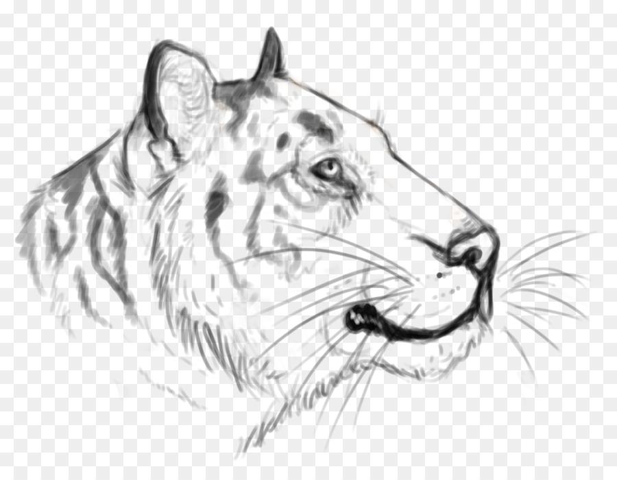 Bigotes De Gato Tigre Rugido De Croquis - realista croquis png ...