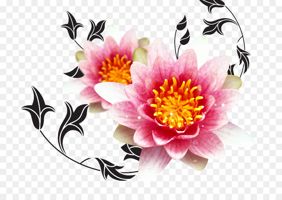 Birthday Cake Wish Chrysanths Plant PNG