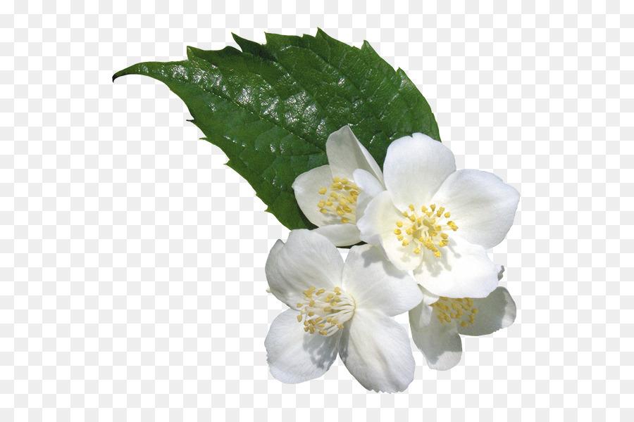 Flower clip art flower png download 600600 free transparent flower clip art flower mightylinksfo