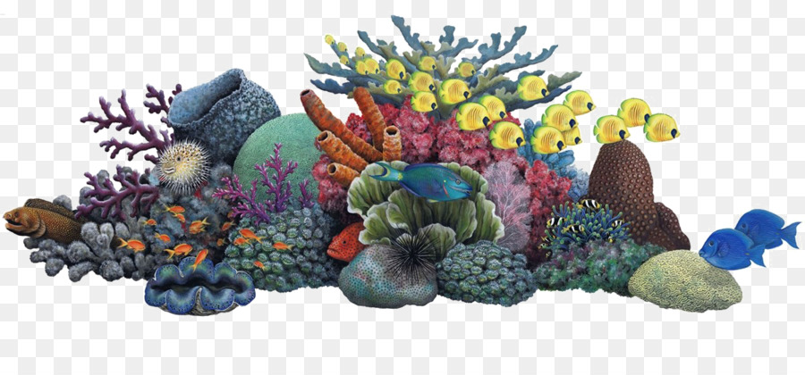 coral reef sea ocean clip art sea png download 1200 536 free rh kisspng com coral reef clipart png underwater coral reef clipart
