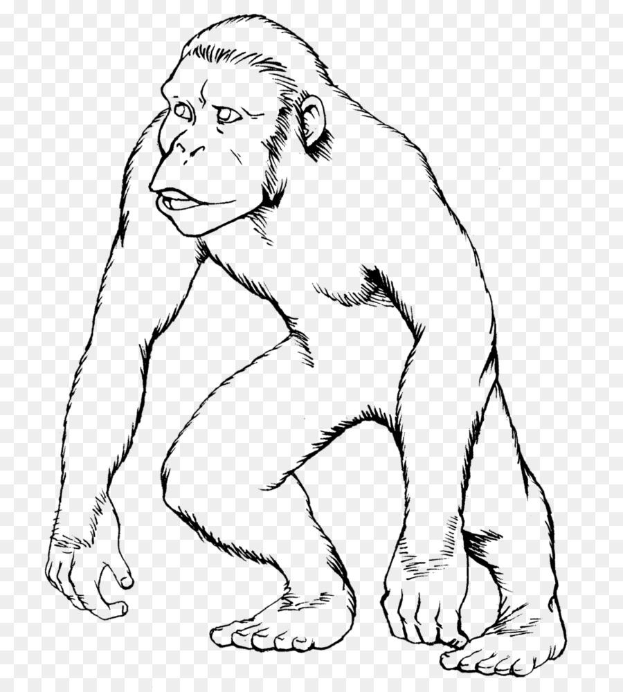 Mono Gorila Dibujo de Mono para Colorear libro - los monos png ...