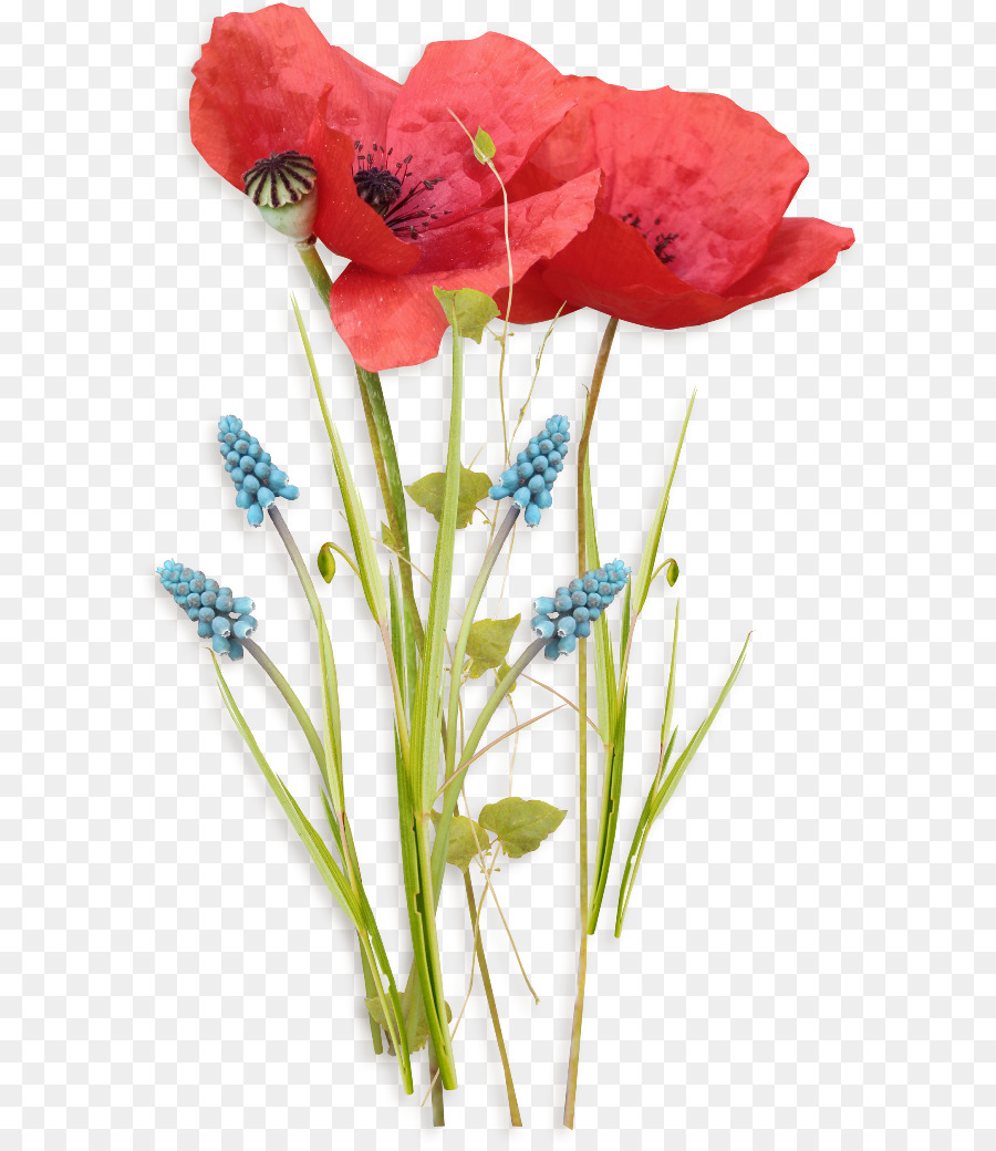 Birthday Poppy Flower Watercolor Painting Birthday Png Download