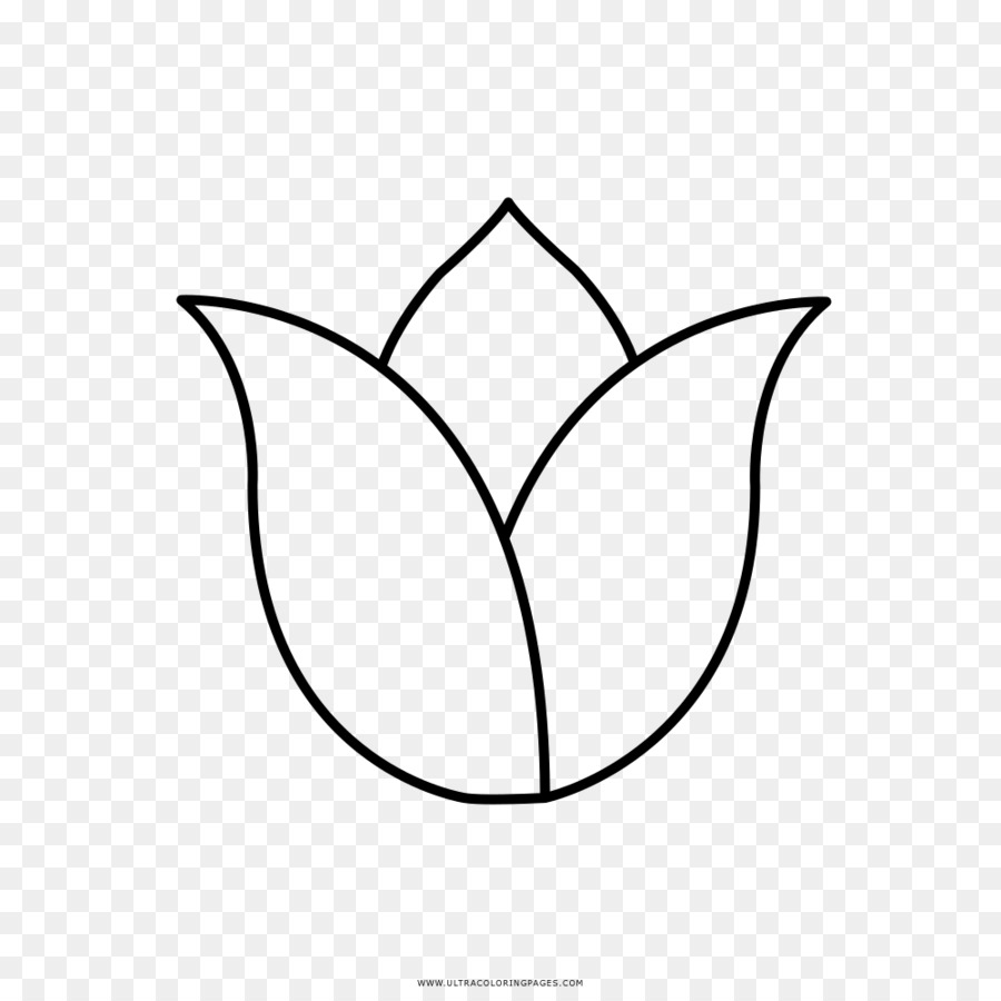 Tulip Coloring Book Painting Clip Art Automotive Prints Png