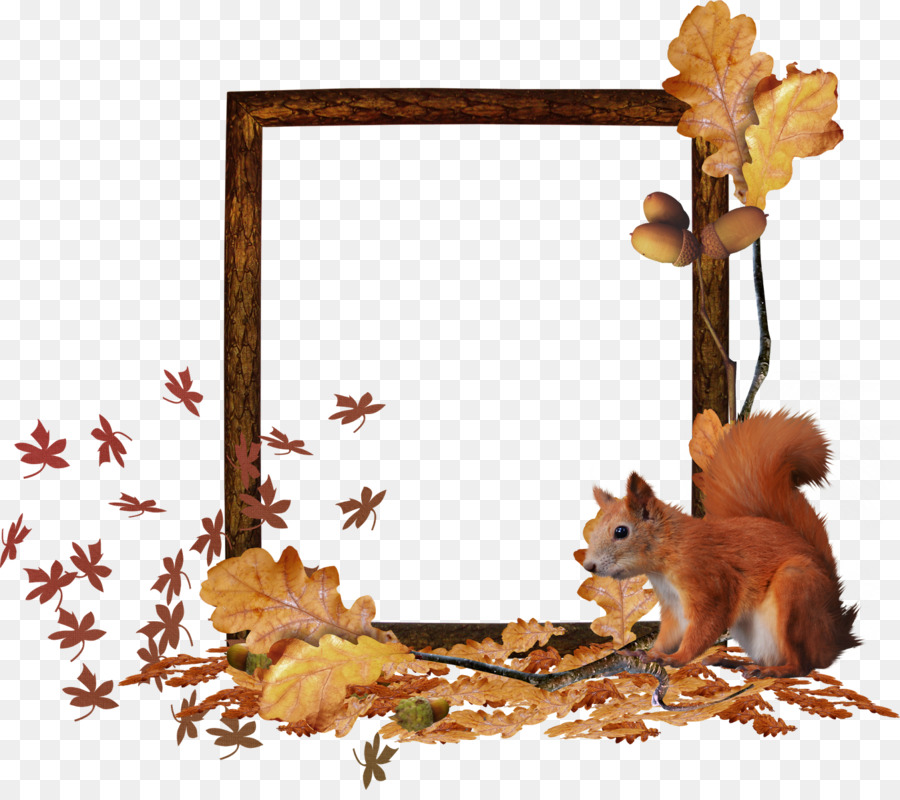 Squirrel Fauna Picture Frames Wildlife Tail - in fall png download ...