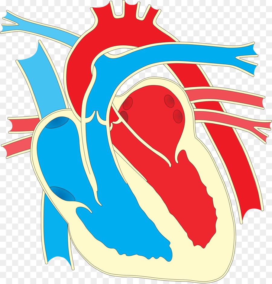 Diagrama de cableado del Corazón de Dibujo Clip art - creativo ...