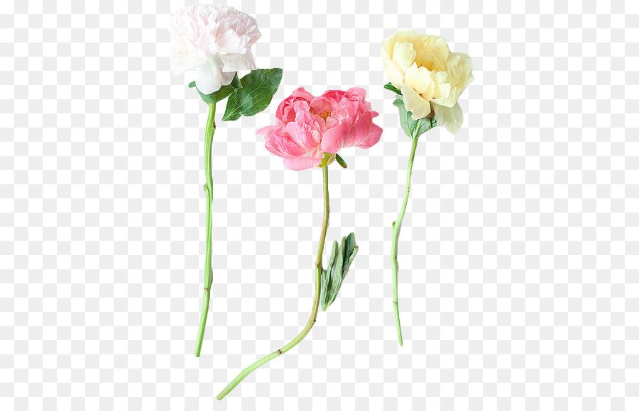 Garden Roses Peony Flower Tumblr Plant Stem Png 445 570 Free Transpa