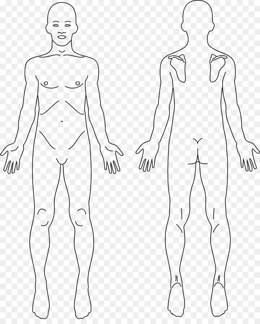 Anatomy human body human back back pain clip art others png anatomy human body human back back pain clip art others ccuart Choice Image