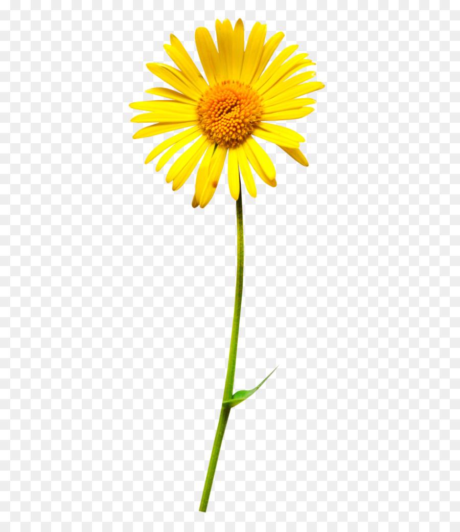 Oxeye daisy flower clip art flower png download 4171024 free oxeye daisy flower clip art flower izmirmasajfo