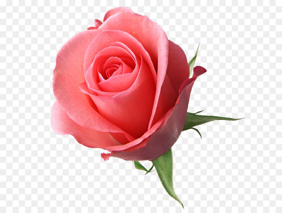 Fiori Rosa Disegno Di Sfondo Per Il Desktop Fiore Scaricare Png