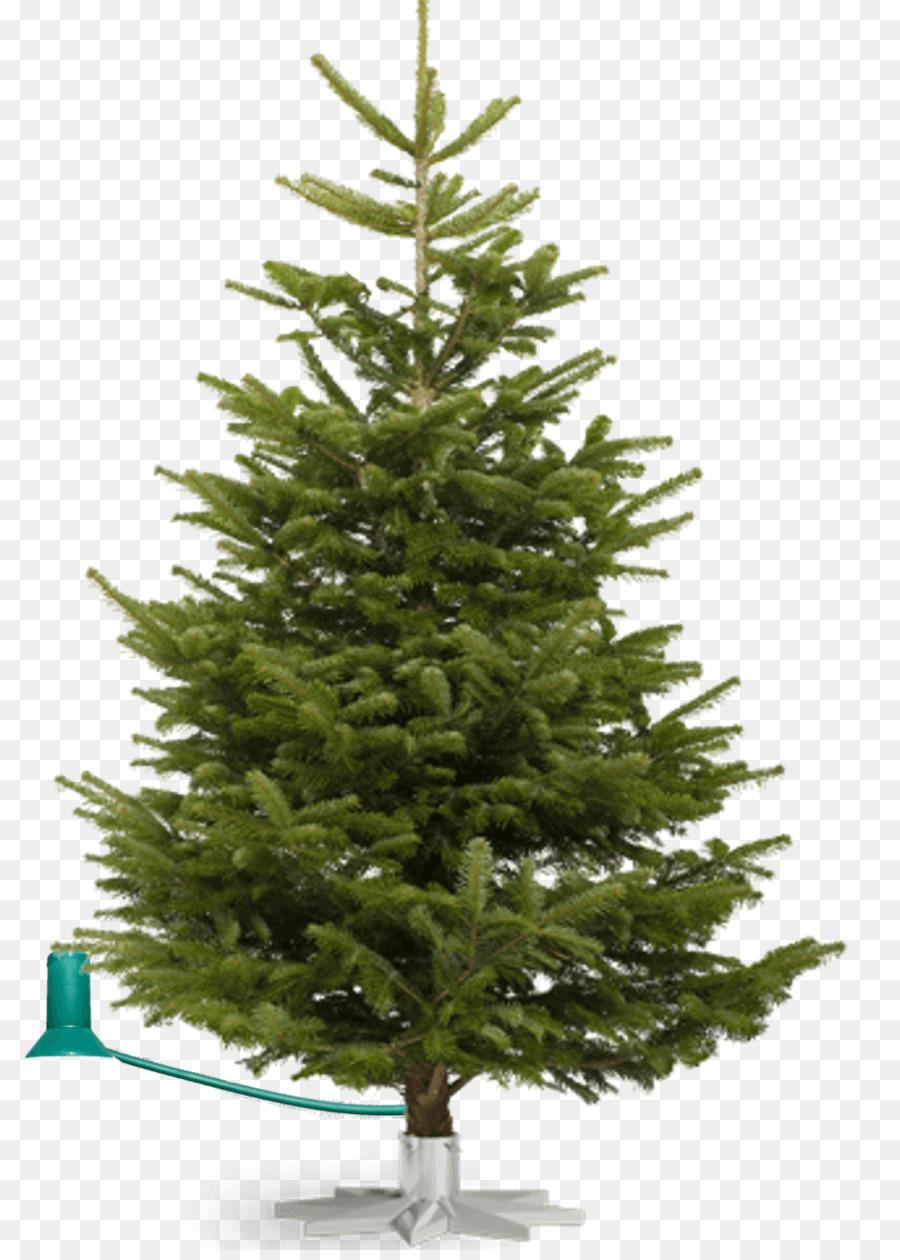 Nordmann fir Fraser fir Noble fir Christmas tree - trees grove png ...