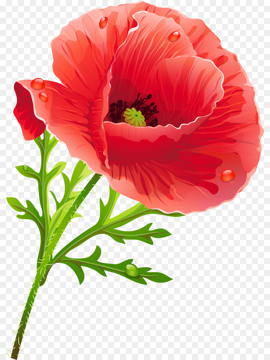 Poppy Flower Clip Art Flower Png Download 8601200 Free