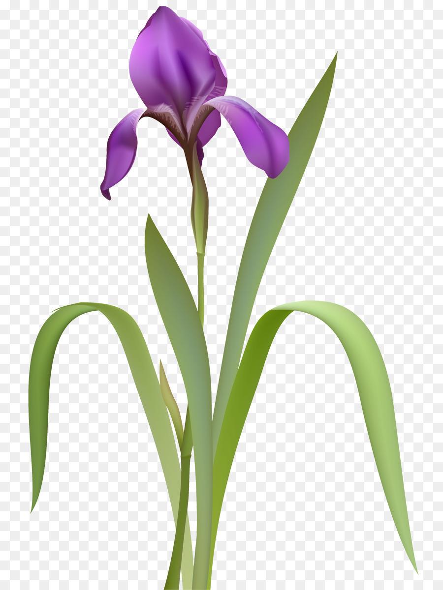 Flor de iris conjunto de datos de fotografas de stock libres de flor de iris conjunto de datos de fotografas de stock libres de regalas ojo izmirmasajfo