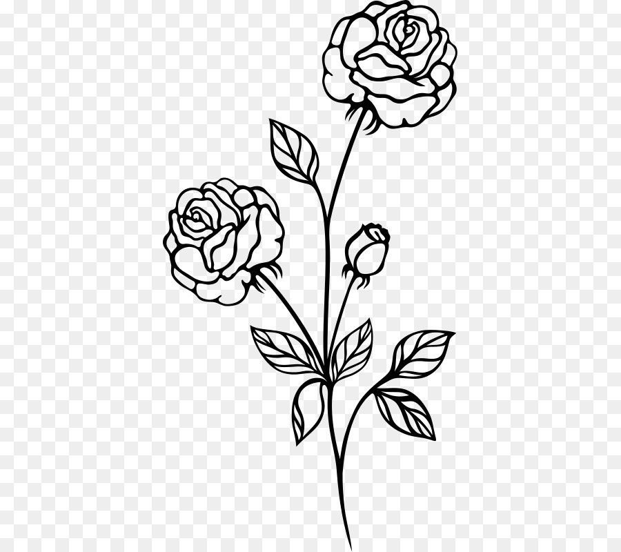 Rose Drawing Shrub Clip Art Rose Png Download 427 800 Free