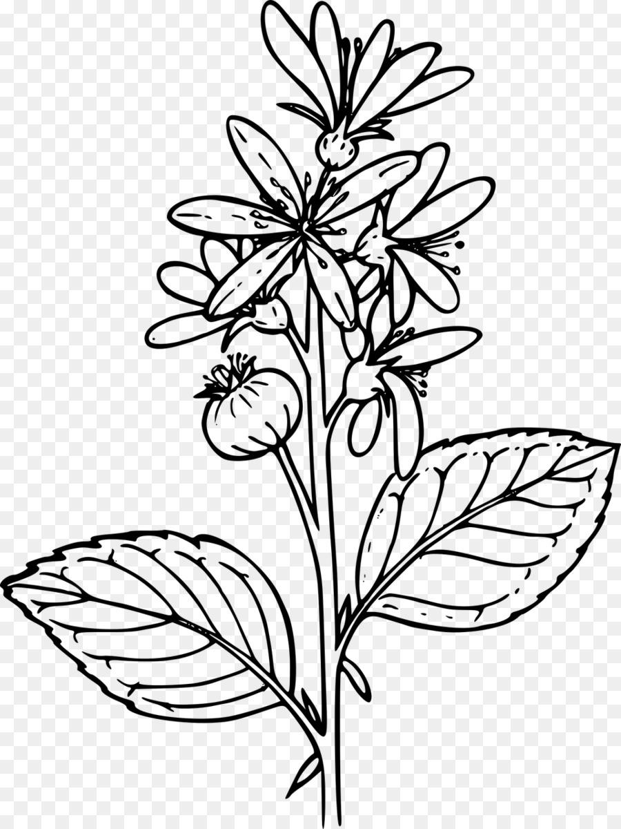 Dibujo de flores Silvestres de la Planta de Clip art ...