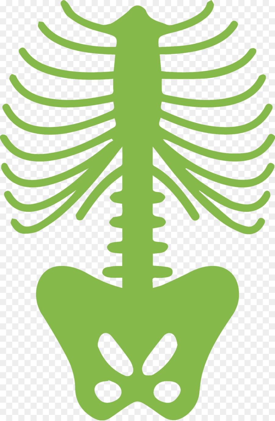 Costillas cuerpo Humano, esqueleto Humano - otros Formatos De ...