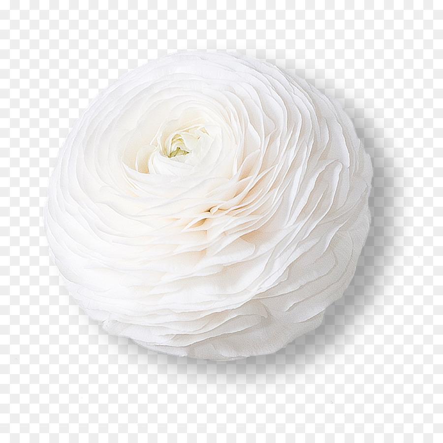 White flower ranunculus asiaticus petal color flower png download white flower ranunculus asiaticus petal color flower mightylinksfo