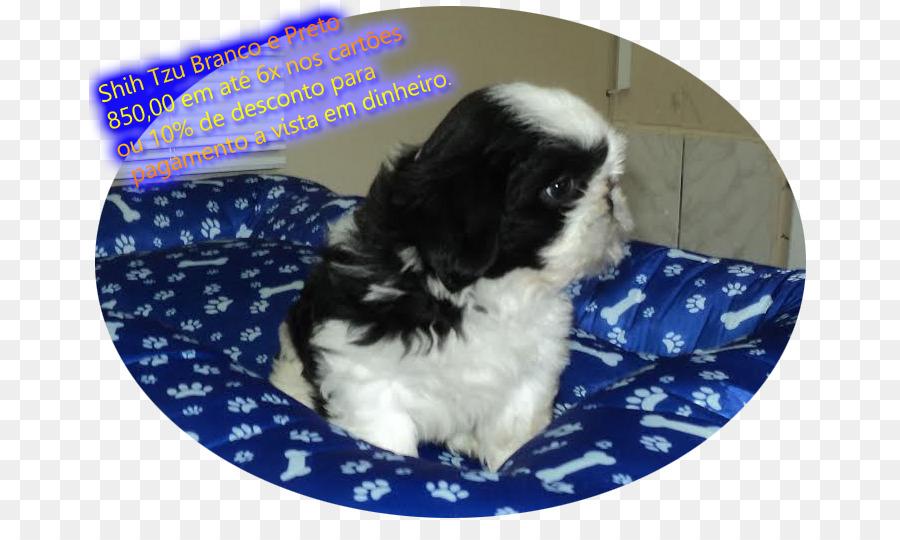 Shih Tzu Japanese Chin Havanese Dog Chinese Imperial Dog Puppy