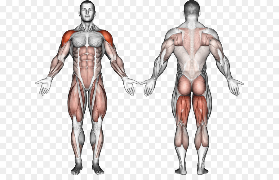 Kettlebell Deadlift Muscle Exercise Human Body Pink Sofa Png