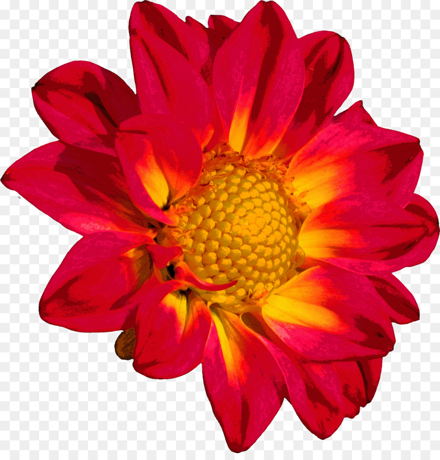 Flower Chrysanthemum Color Clip art - flower png download - 2360 ...