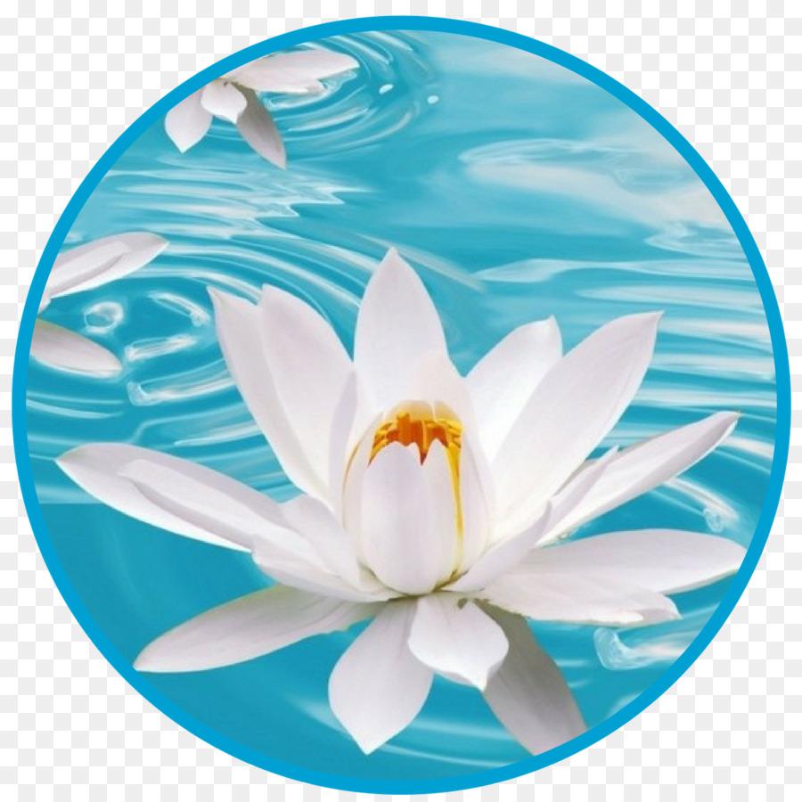 Flower Desktop Wallpaper White Blue Nelumbo Nucifera Lotus Flower
