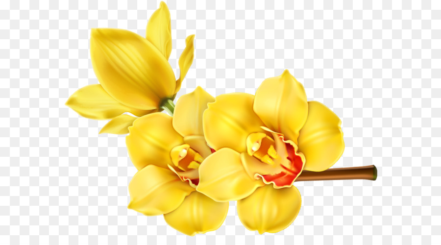 Orchids flower floral design clip art flower png download 640 orchids flower floral design clip art flower mightylinksfo