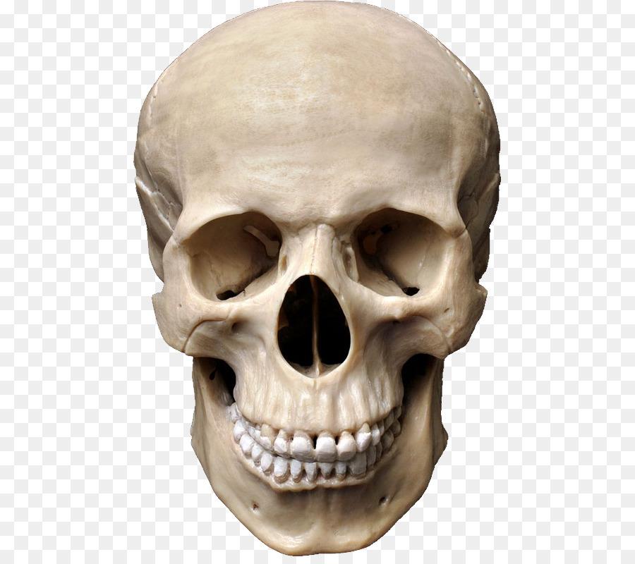 Human skull symbolism Stock photography Anatomy - skull png download ...