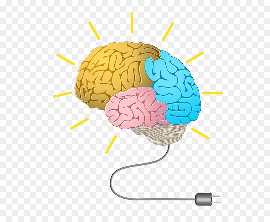 Human Brain Neurofeedback Cognitive Training Memory Brain Png