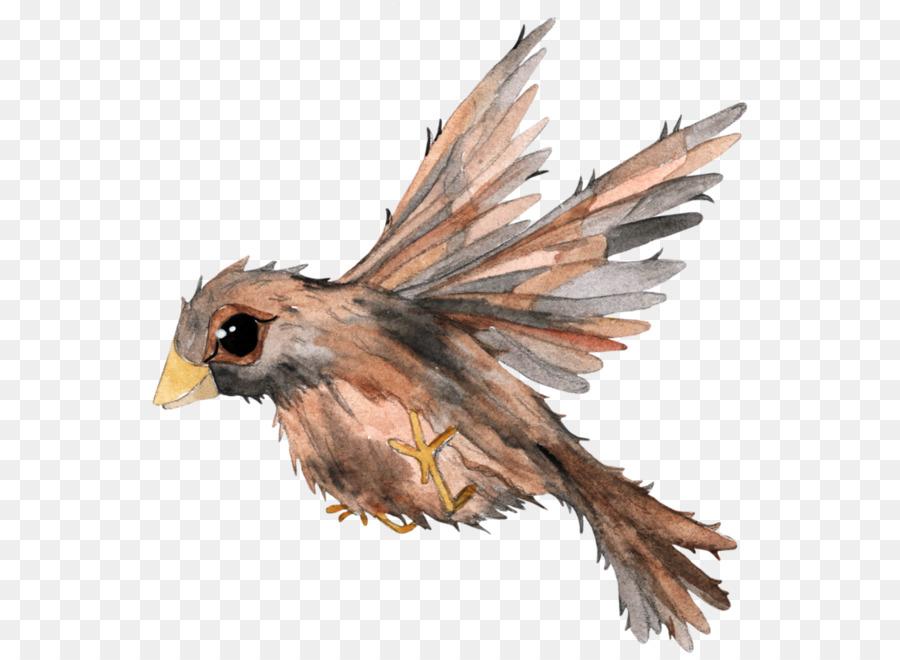Kuş Boyama Kuş Png Indir 600656 Serbest şeffaf Yırtıcı Kuş