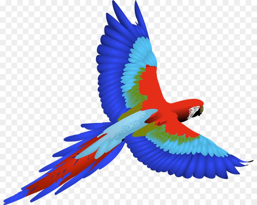 parrot bird macaw clip art parrot png download 876 720 free rh kisspng com scarlet macaw clipart macaw clip art color