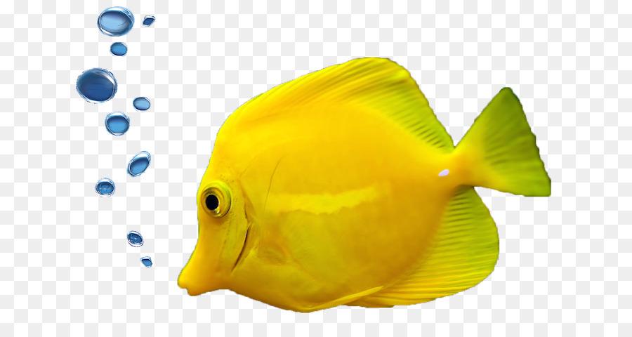 Tropical Fish Aquarium Ornamental Fish Fish Png Download 704 480