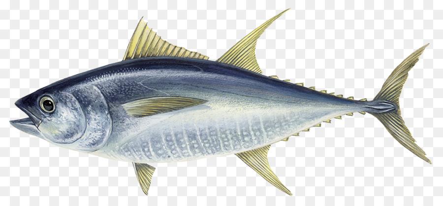 Atlantic bluefin tuna Albacore Yellowfin tuna Da Hui Fish - fish png ...