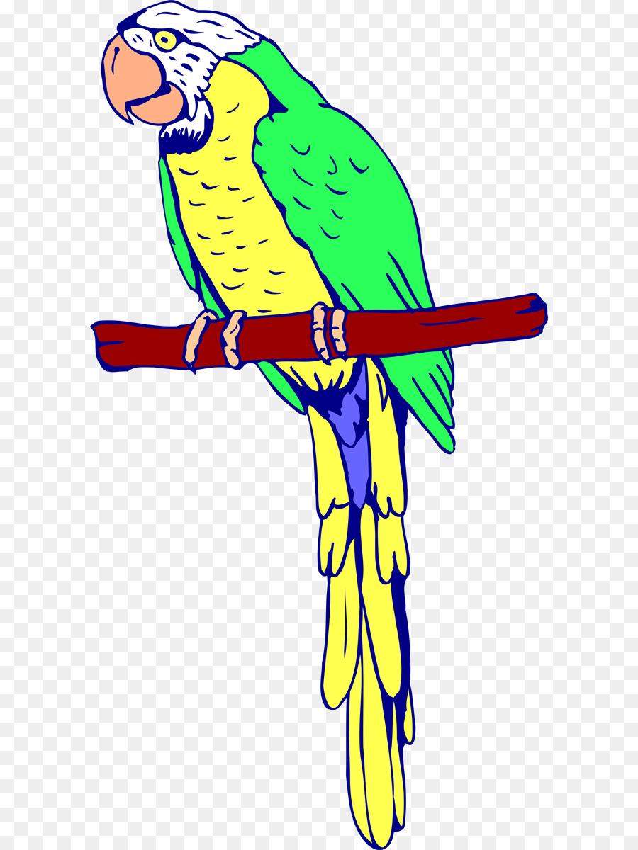 Amazon loro Pájaro libro para Colorear Guacamayo - loro Formatos De ...