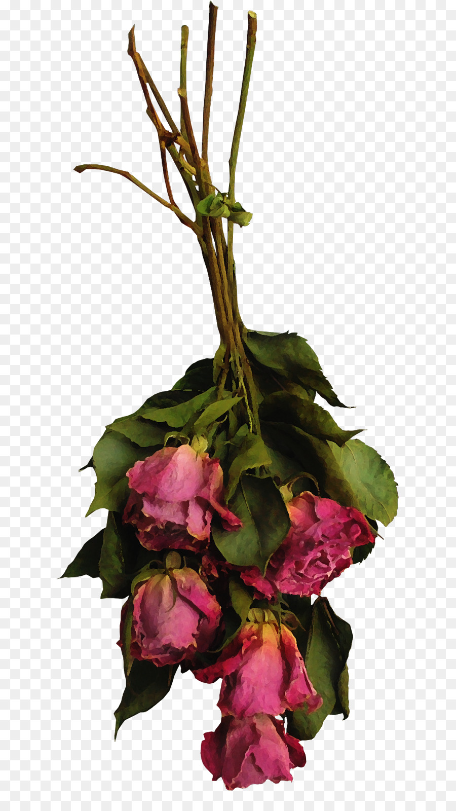 Floral design Cut flowers Rose Flower bouquet - dried flowers png ...