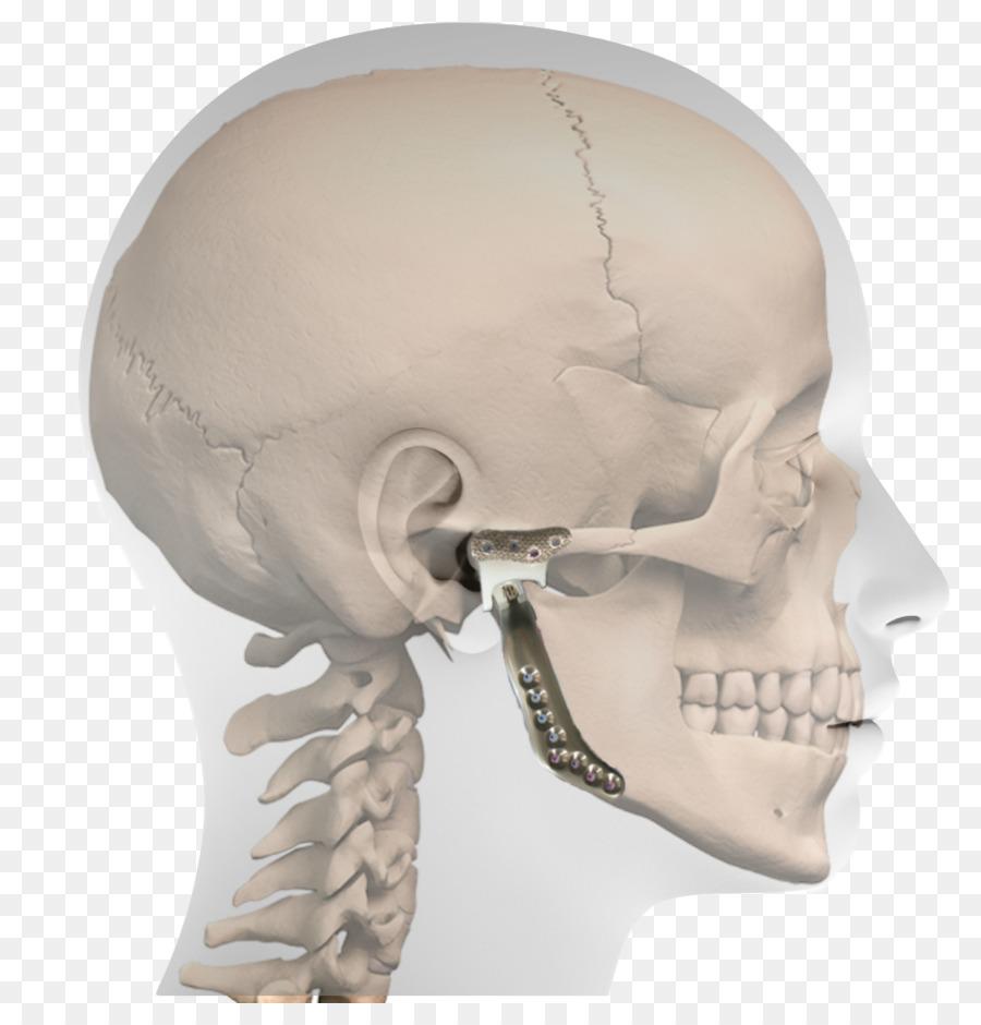 Nariz Estándar de la posición anatómica plano Horizontal de la ...