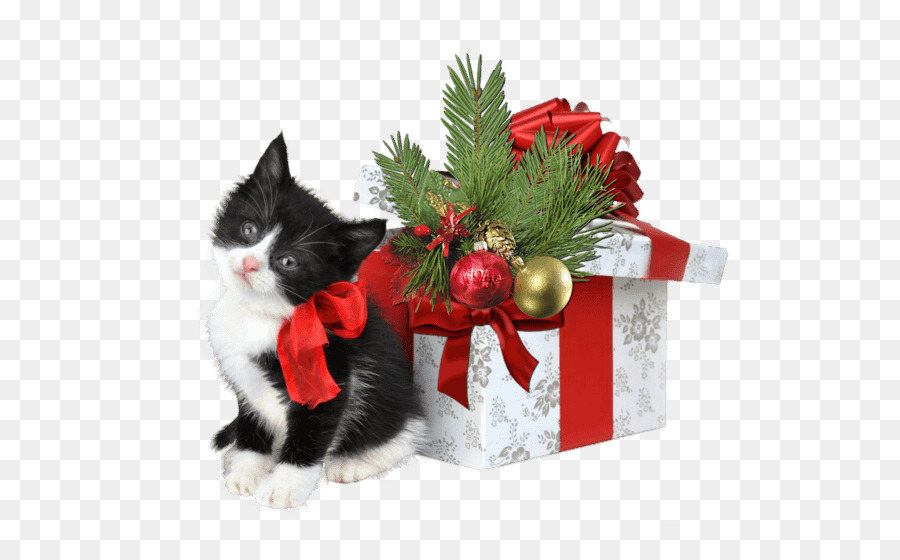 Cat Kitten Christmas gift Christmas gift - web decoration png ...