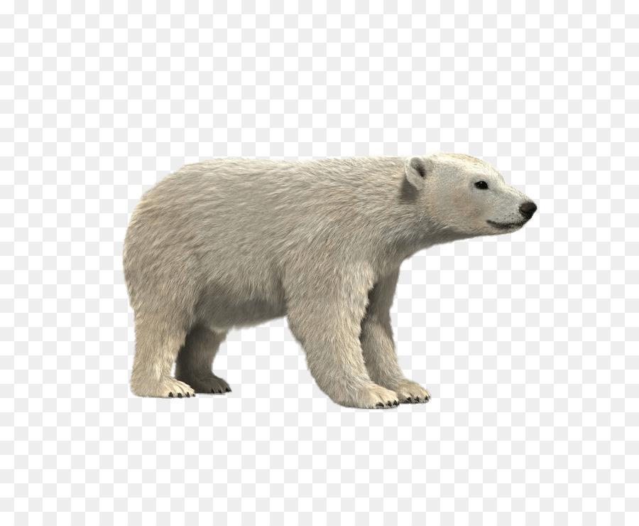 Oso Polar oso pardo de modelado 3D panda Gigante Ártico - oso polar ...