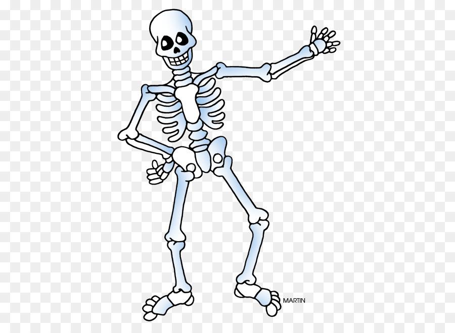 Esqueleto humano Clip art - Esqueleto png dibujo - Transparente png ...