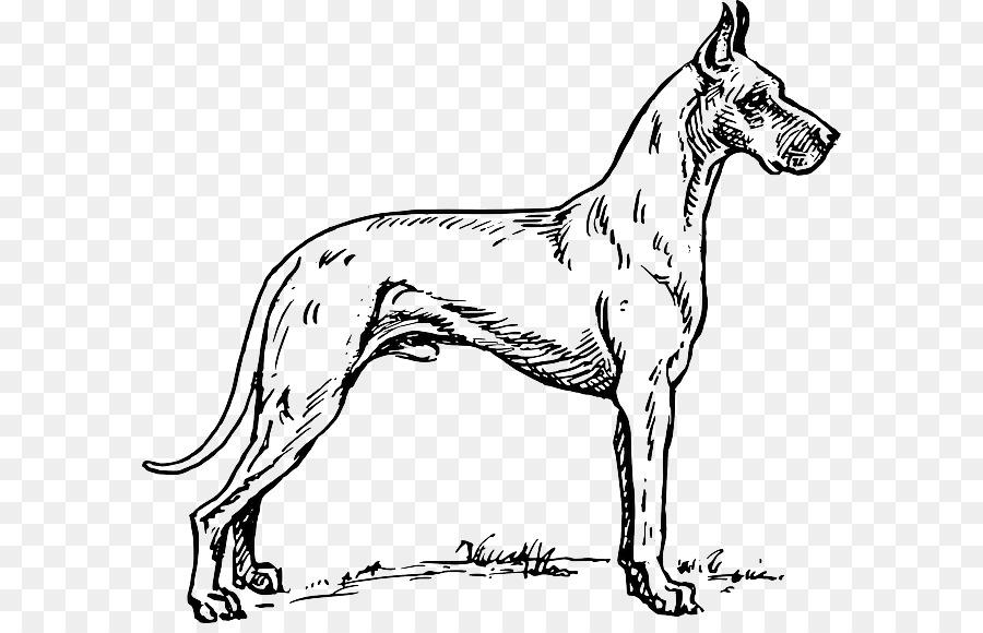 Danua Dalmaçyalı Köpek Boyama Kitabı Pit Bull Greyhound Köpek