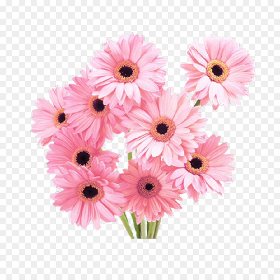 Transvaal Daisy Cut Flowers Paper Rose Blooming Flowers Png