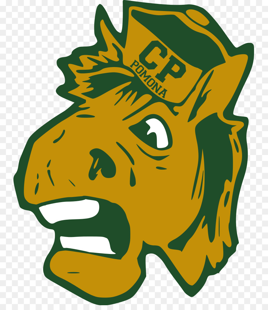 California State Polytechnic University Pomona Cal Poly Broncos Mens Basketball Adapted Physical Education