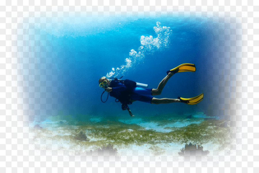 Underwater Diving Scuba Diving Open Water Diver Diver Certification